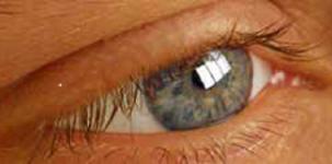 FG 10 Das menschliche Auge