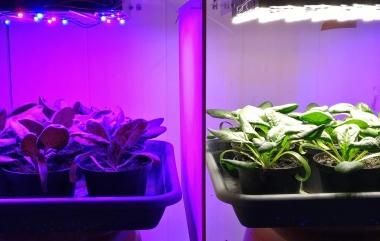 Buntes Licht für bessere Ernte