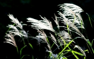 reed_2354137_1920.jpg